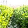日本代表こだわり農家 川西農園《後編》