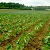 日本代表こだわり農家 加瀬農園《前編》